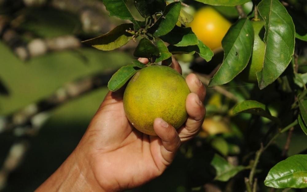 Paraná tem maior índice de produtividade de laranja e milho no país, diz governo