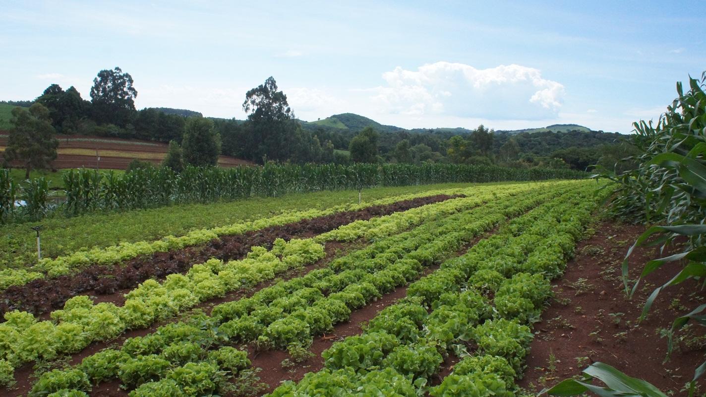 Produção de hortaliças garante sustento de família em Laranjeiras do Sul