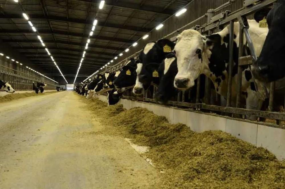 Show Rural: balança de passagem e confinamento com ventilação cruzada serão atrações na área da pecuária