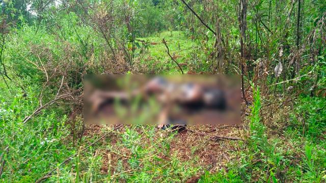 Policia Militar encontra corpo carbonizado em Laranjeiras do Sul