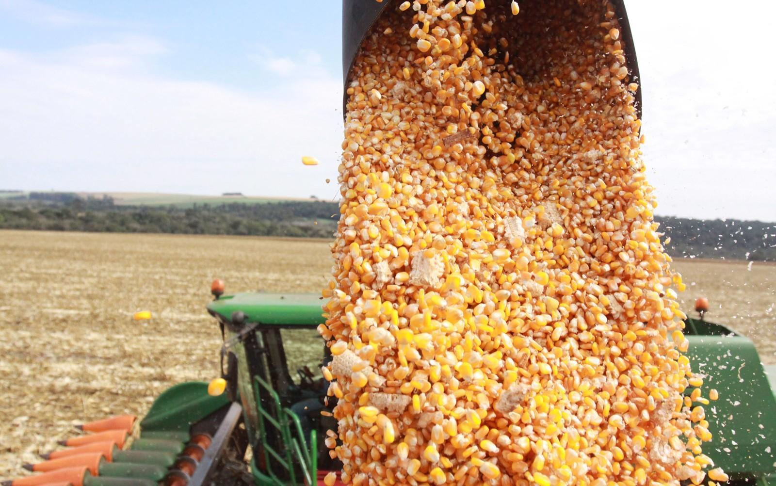 Governo projeta safra de grãos 6% maior no Paraná impulsionada pela produção de milho