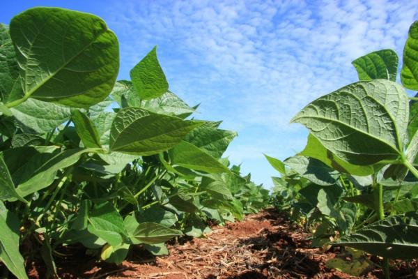Puxado pela agricultura, PIB do Paraná recua 1,61% no período