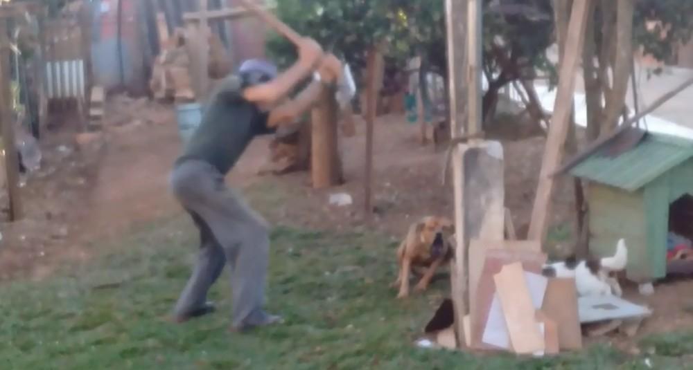 Idoso que matou cachorro com foice é multado em R$ 3 mil e deve responder por crime de maus-tratos