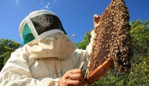 Secretaria de Agricultura de Virmond cria Programa de Incentivo à Apicultura e Meliponicultura