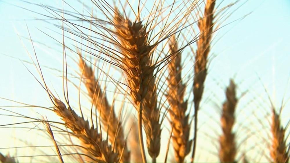 937 produtores rurais de Guarapuava que não emitem notas fiscais há três anos têm cadastro cancelado