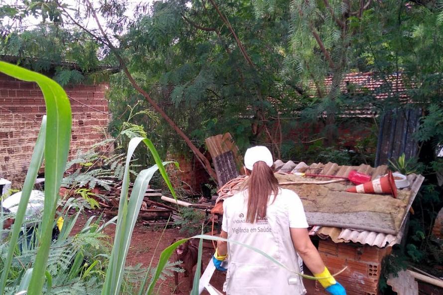 Paraná registra 57 óbitos e mais de 76 mil casos por dengue