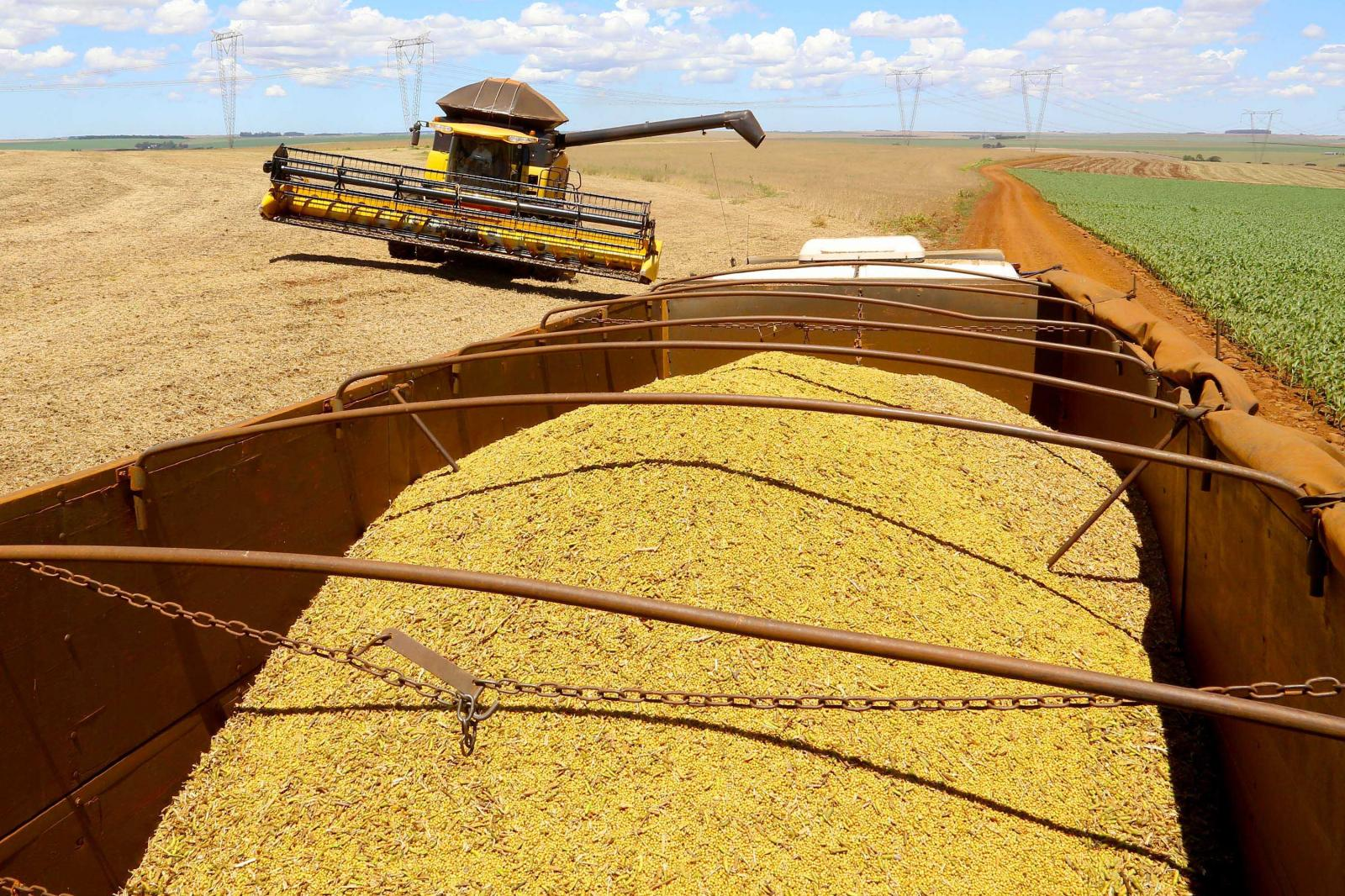 Alta de 15,7% na agropecuária reduz impacto da pandemia sobre o PIB