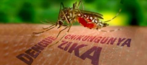 Saúde divulga boletim da dengue, zika e chikungunya no Paraná